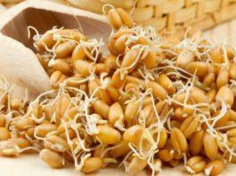 Проросшая пшеница способна вылечить весь организм!