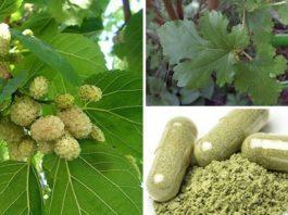 Это растение повсюду, но вы понятия не имели, что оно может лечить опухоли, диабет и высокое кровяное давление!