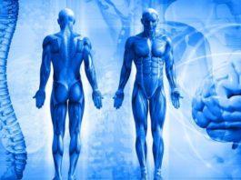 Соблюдайте эти 4 правила — и ваше тело ответит вам здоровьем и долголетием