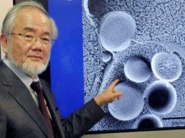 Нобелевская премия 2016 года: как очистить организм и обрести молодость?