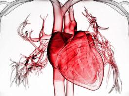 Оздоровление сердечной мышцы: Советы, которые предотвратят сердечные сбои