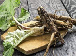 Корень лопуха – его лечебные свойства и применение в народной медицине
