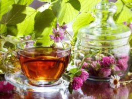 Настойка красного клевера для сосудов: лечебные свойства и противопоказания