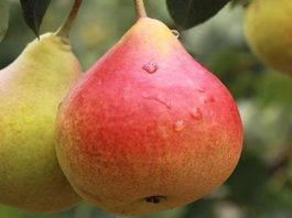 9 лучших фруктов при преддиабете и диабете, а также при избыточном весе