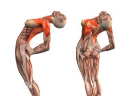 Эти простые упражнения улучшают кровоснабжение мозга, выпрямляют позвоночник, освобождает сосуды от зажимов