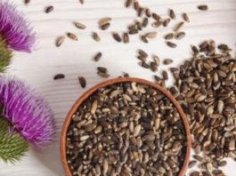 Расторопша: природный дар для печени и почек