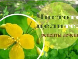 Обычный чистотел – чистое тело. Полное руководство по лечению травой и корнями, удаление родинок и папиллом. Квас по Болотову
