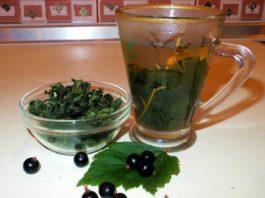 Теперь я каждый год заготавливаю смородиновые листья — это отличное лекарство для почек и суставов