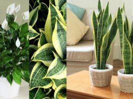 У моей соседки домашние растения всегда сочно-зеленые и цветут весь год. Наконец-то она рассказала мне ее секрет