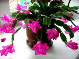 Маленькая хитрость: чтoбы цвeты в дoмe цвeли пышнo и дoлгo