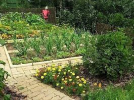 Сода, соль, кефир и дрожжи пригодятся в огороде
