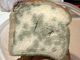 Врач-натуропат: Современный хлеб я считаю одним из самых страшных изобретений человечества